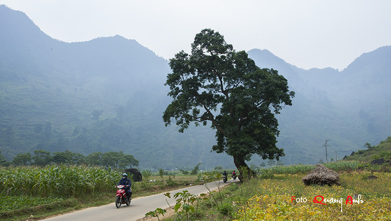 Hình ảnh Hà Giang