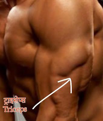 exercise tips for biceps and triceps in hindi, biceps, triceps, bicep workout, tricep workout, exercise, how to get bigger biceps, bicep muscles, बाइसेप, ट्राइसेप, मसल्स कैसे बताएं, बॉडी बिल्डिंग, bodybuilding, बॉडी कैसे बनाये, बॉडी बनाने का तरीका