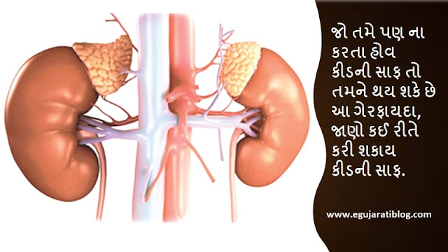 how to clean kidney in Gujarati