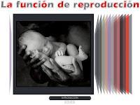 http://catedu.es/chuegos/kono/sexto/t6/index.swf