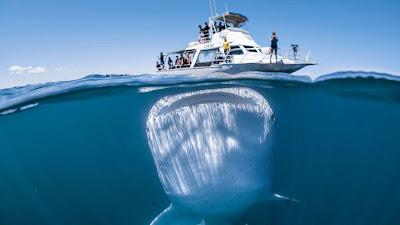 ¡Tiburón! ¡Gigante! La imagen única captada por un fotógrafo bajo el agua a un pequeño barco con turistas
