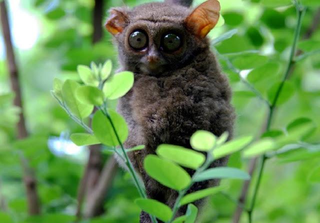 Hewan Terancam Punah di Indonesia