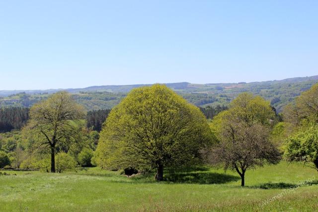 camino-de-santiago-frances-vista-bosque-barbadelo-a-mercadoiro