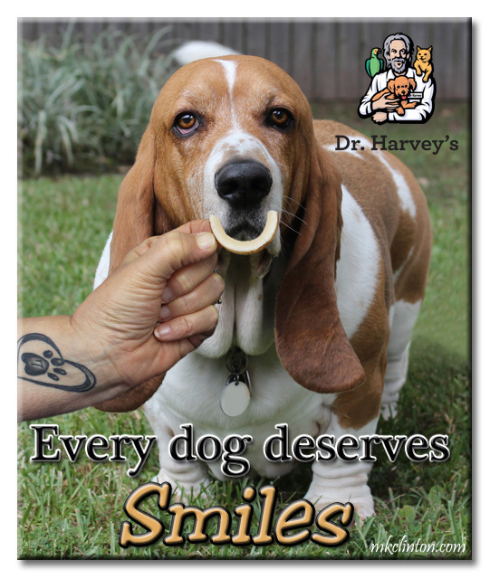 "Bentley Basset Hound says ""Every dog deserves Dr. Harvey's Coconut Smiles"""