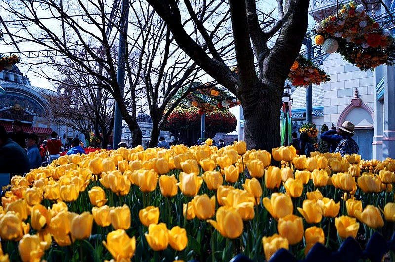 Flower festival in Everland (Korea E Tour)