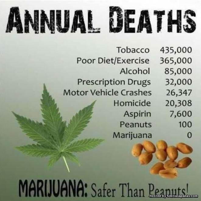 Rahsia Kenapa Dunia Perubatan Moden Mengharamkan Marijuana