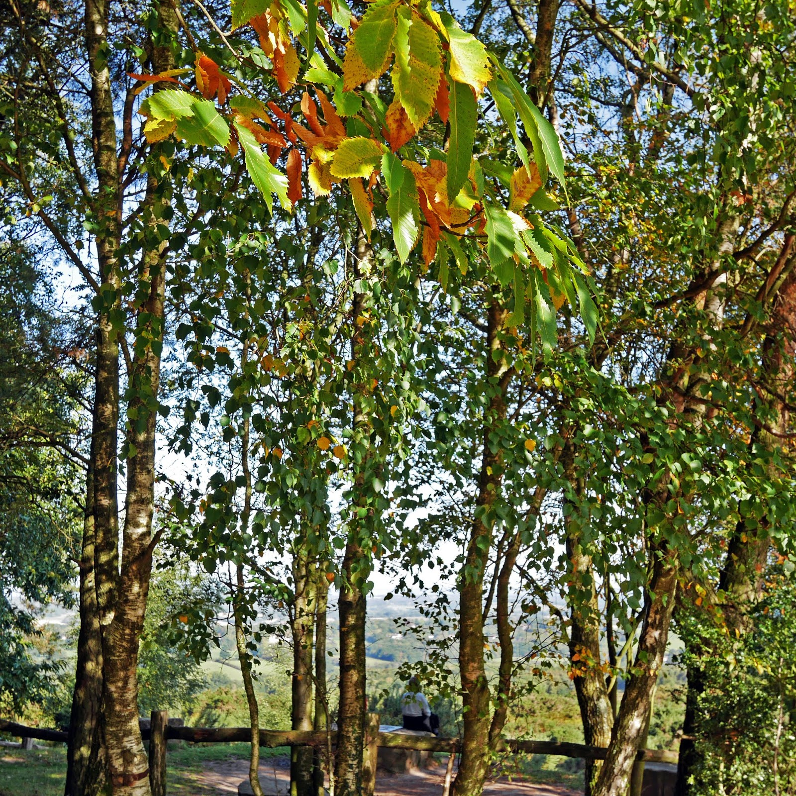 Autumn leaves near the A.A. Milne and E.H. Shepard Memorial, Ashdown Forest
