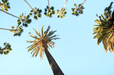 Palisades Park Palm Trees - California Photography by Mademoiselle Mermaid