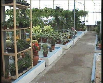 Fitosofia vivero de plantas ornamentales primera parte for Como realizar un vivero