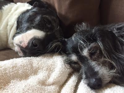 Josie and Ozzie