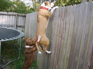 Почему собаки... Собачьи вопросы с ответами
