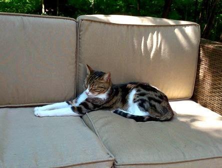draußen katze zur wohnungskatze