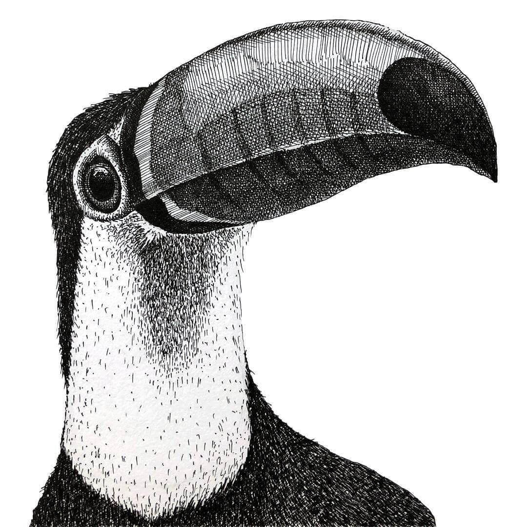 10-Toucan-Gaspar-Animal-Stippling-and-Cross-Hatching-B&W-Drawings-www-designstack-co