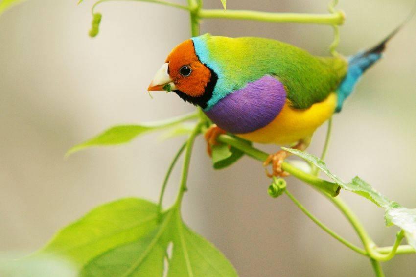 Amazing World & Fun: Beautiful Colorful Birds - Nature - photo#24
