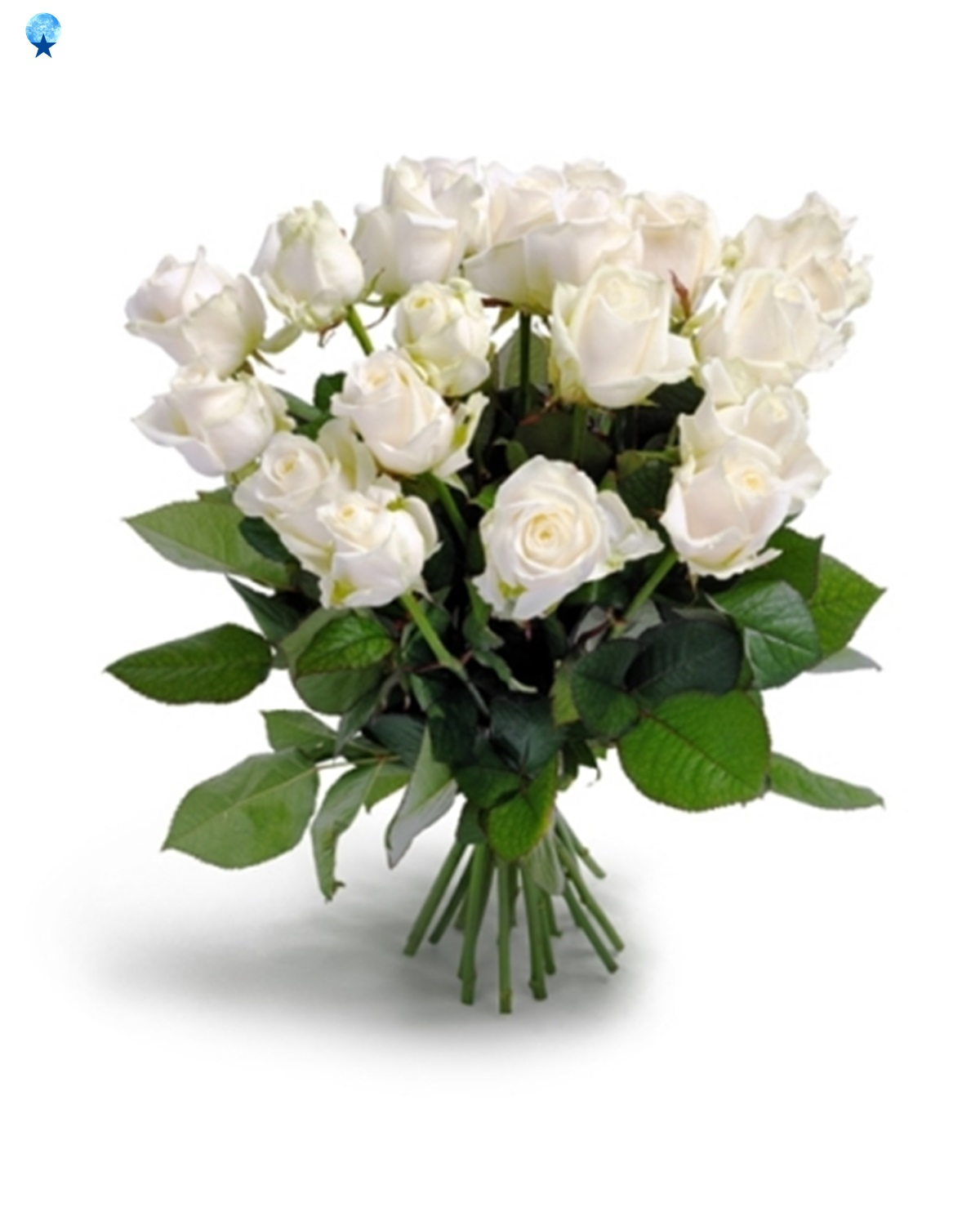 Hd flowers white roses flowers rose white bunch rose blooms white has ever been an image of purity of a world pristine and untarnished the significance of a cluster of sparkling white roses is honesty and profound mightylinksfo