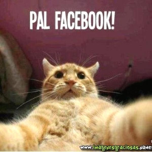 Imagenes Graciosas Chistosas Memes para reir de gatos