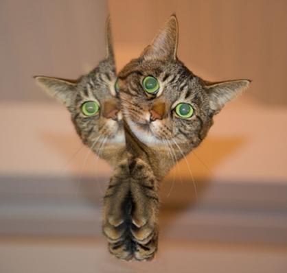 Ciri-Ciri Kucing