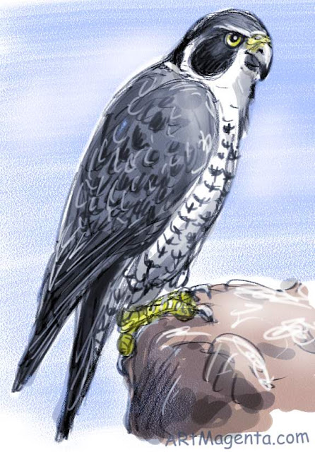 A bird painting of a Peregrine Falcon  by ArtMagenta