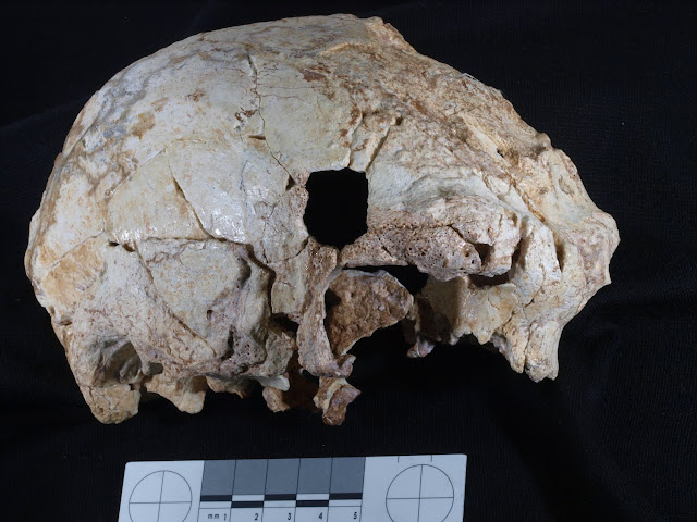 400,000-year-old fossil human cranium is oldest ever found in Portugal