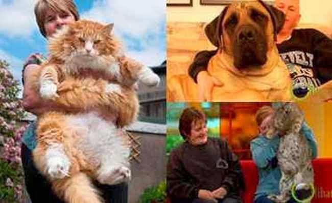 10 Binatang Peliharaan yang paling Terbear di Dunia