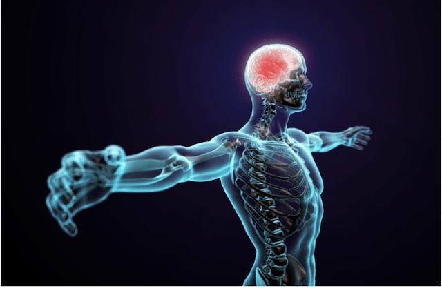 İnsan Vücudu Harikası 1 / İskelet Sistemi