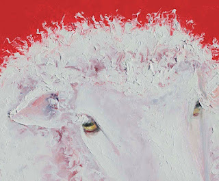 Closeup detail of Merino sheep