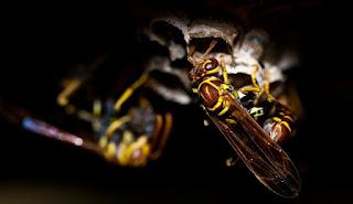 خلية النحل في المنزل في المنام بالتفصيل