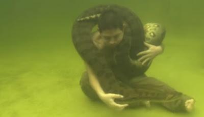 Ular besar anaconda