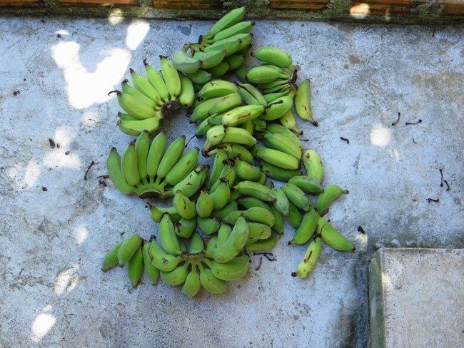 Куча бананов лежит на бетоне
