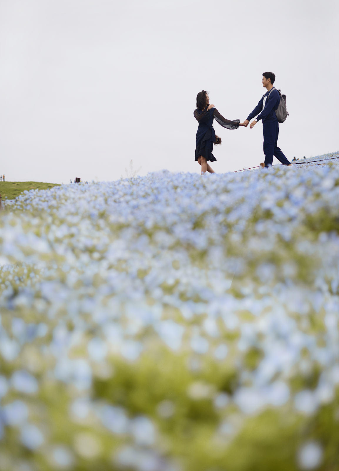 Hitachi Seaside Park, Nemophila Fields, Blue Flower Fields, Japan Travels / FOREVERVANNY.com