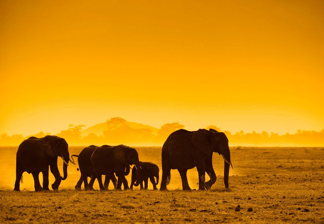 Foto met olifanten bij zonsondergang