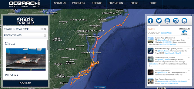ocearch.org/profile/cisco/