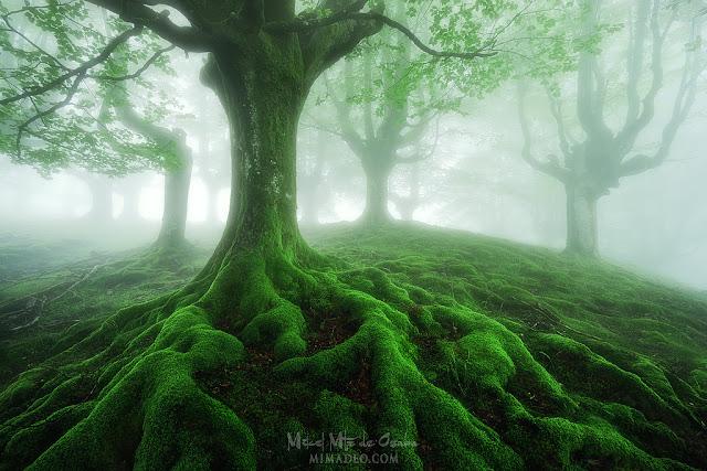 Bosque de Belaustegi en Gorbea