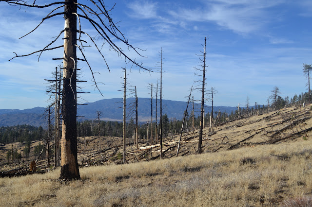 standing dead trees