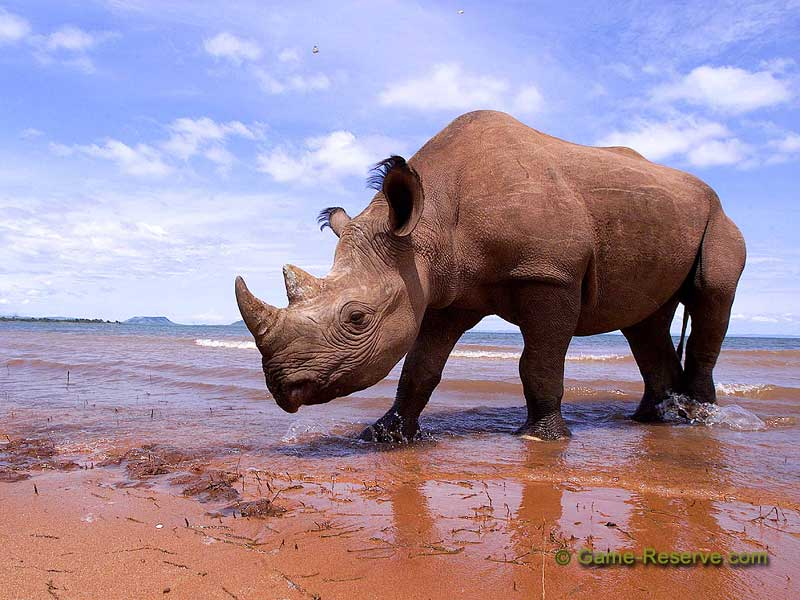 Species New To Science Mammalogy Extinct Africa S