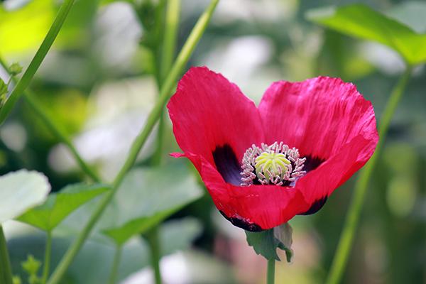 plantas-medicinales