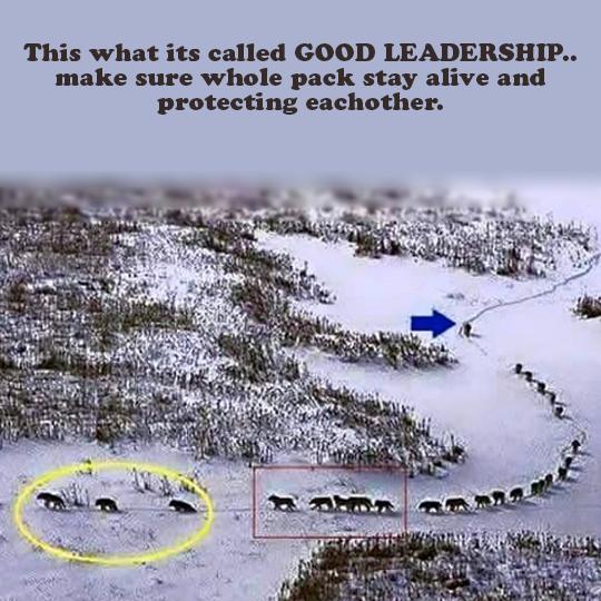 Ricuh Masalah Kepemimpinan? Coba Belajar Dulu dari Kelompok Ini!