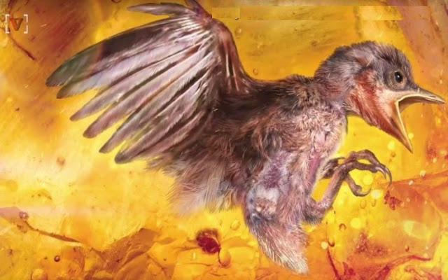 Απίστευτο: Επιστήμονες βρήκαν αναλλοίωτο πτηνό 99 εκατ. ετών παγιδευμένο σε κεχριμπάρι