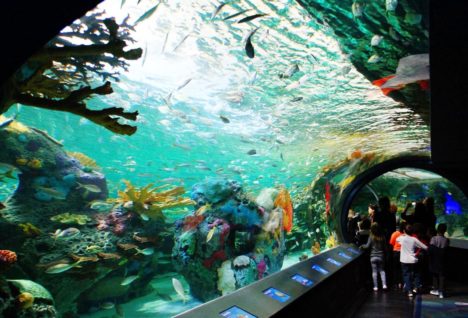 Toronto Ripley S Aquarium Laura Clarke Photos