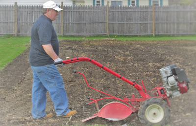 Husband tilling the garden