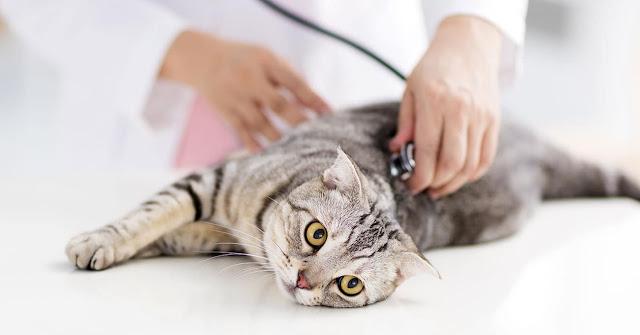 8 أطعمة ضارة للقطط يجب تجنب إعطائها لهم