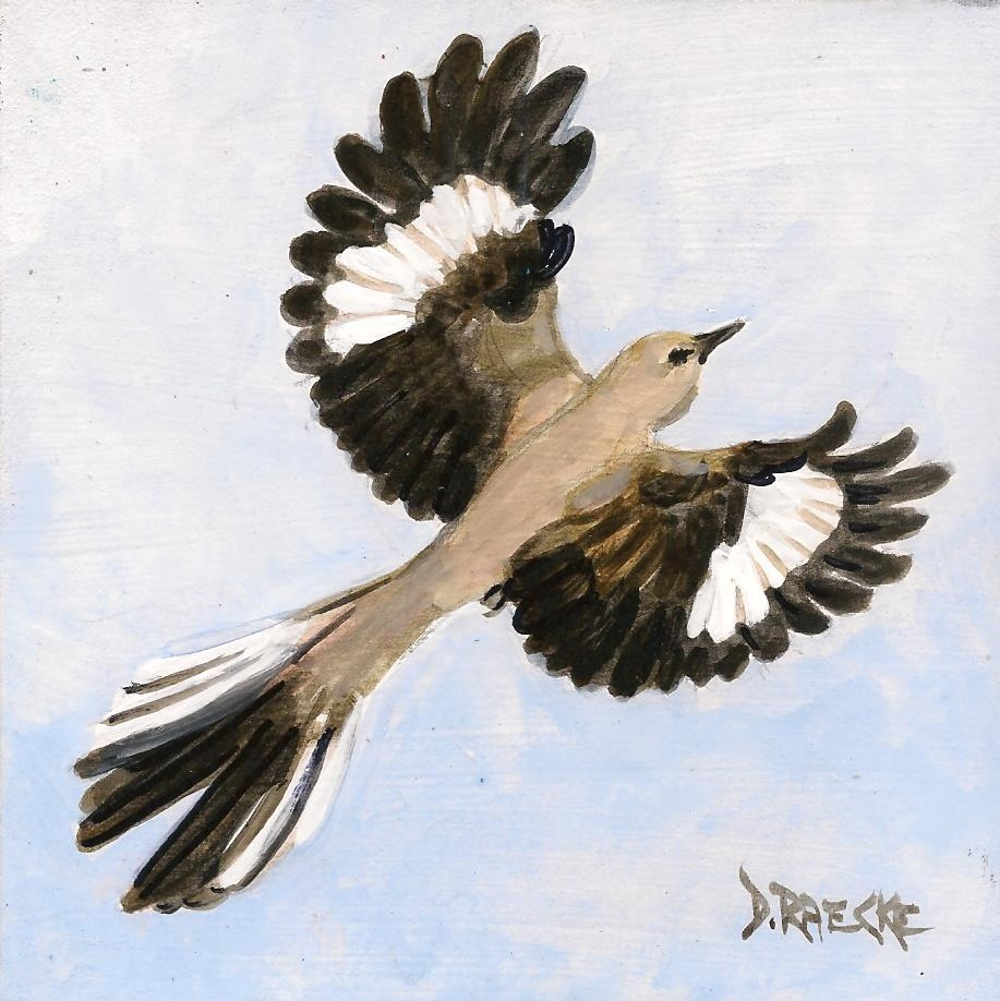 Texas state: mokingbird / Ave emblemática de Texas: el ruiseñor