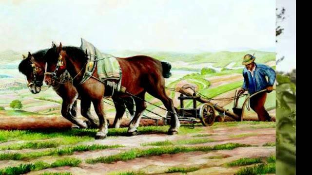 أعمال الفلاح في الحقل