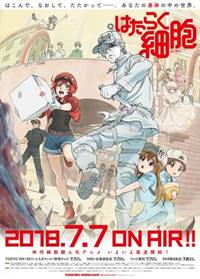 Sinopsis Anime Hataraku Saibou (Cells at Work!) indonesia