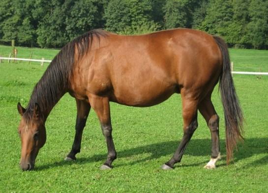 Cara Mudah Ternak Kuda