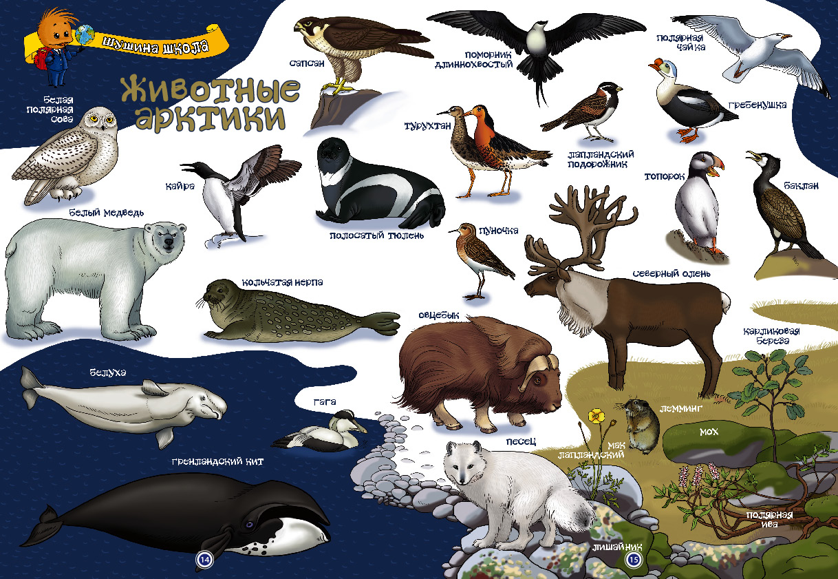признал, что животные антарктиды фото с названиями и описанием пакетики кладу морозилку