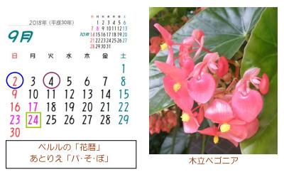 2018年 花暦 9月