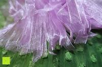 Schleifen: 50pcs Wedding Candy Boxes Butterfly Laser Cut Kartonage Schachtel Bonboniere Geschenkbox Hochzeit (Purple)