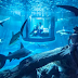 Renting a Room in a Shark Aquarium!
