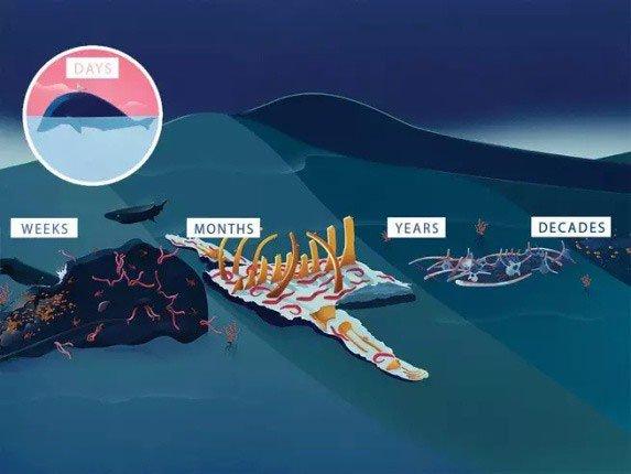 Vì sao khi chết đi rồi, cá voi vẫn có ích đến hàng chục năm sau